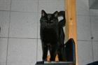 Zupfi(2008)EHK/Katzen