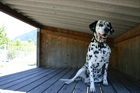 Mali (2002)Dalmatiner/Hunde