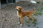 Rocky(2010)Mischling/Hunde