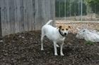 Agatha(2008)Mischling/Hunde