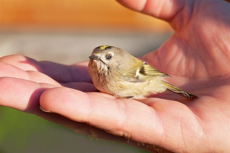 Hände weg von Jungvögeln