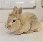 Harry(2012)Kaninchen/Kleintiere