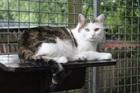 Cindy (2011)EHK/Katzen