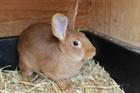Ulla(2014)Kaninchen/Kleintiere